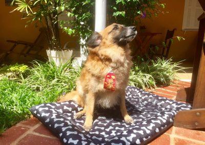 Nossos pets Bob da Moa Pousada em Guarujá